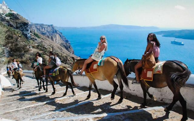 Santorini Donkey  Donkey Rides in Santorini